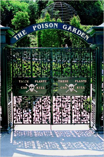 Alnwick Garden - The Poison Garden has about 100 varieties of toxic plants, as well as cannabis and opium poppies.    I'd like to see a list of what they have planted there.  Considering the huge number of plants with poison parts I'm surprised they have only 100 or so there.