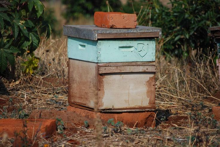 Atotonilco El Alto bee hive 1