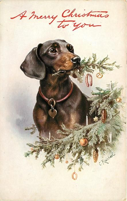 """Set Title: -Favourite Dogs -First Use: December 24, 1909 -Set Comment:::-Oilette -Processed in Bavaria for Raphael Tuck & Sons -Sold: Great Britain, France -Paper Cut-outs -Card Comment: Print in red """"A Merry Christmas to You"""" or """"Christmas Greetings"""" -Artist: C. REICHERT -Card Title: DACHSHUND CHEWS SPRIG OFF CHRISTMAS TREE"""
