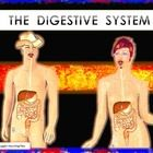 The Digestive System is a power point presentation design to help you teach middle and high school students.The main concepts related with the stru...