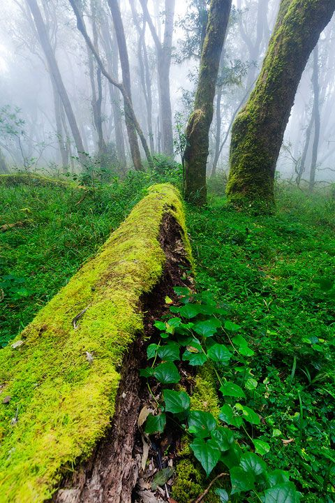 Landscape photo of the lush afromontane forests of magoebaskloof in South Africa