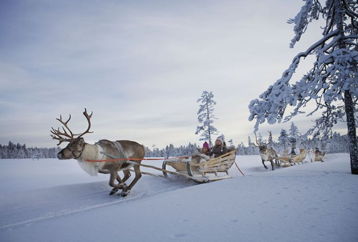 Come and experience winter adventure near Levi skiing center in Finnish Lapland.