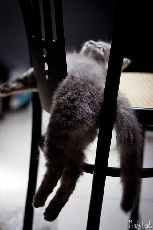 He has claimed the chair as his. pic.twitter.com/K7F5oAnskj