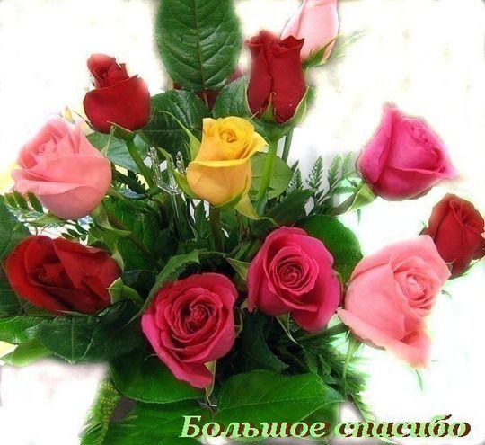 Розы. Посадка роз. Когда сажать розы. - Садоводка