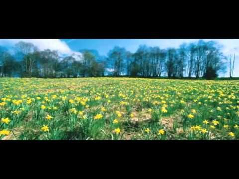Eckhart Tolle - Acceptance and Surrender (video) - YouTube
