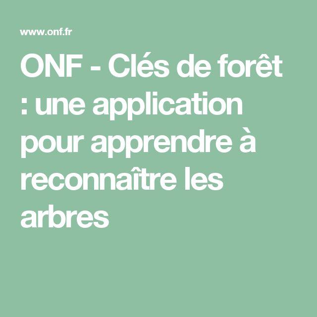 ONF - Clés de forêt : une application pour apprendre à reconnaître les arbres