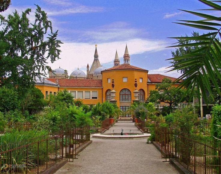 Ботанический сад Падуи – #Италия #Венето (#IT_34) Orto Botanico в итальянской Падуе - прародитель всех ботанических садов мира! http://ru.esosedi.org/IT/34/1000116708/botanicheskiy_sad_padui/