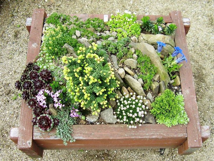 Super Small Rock Garden