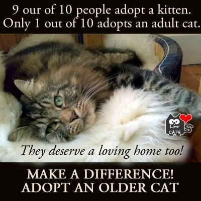 Our cat is a senior kitty. We call our home her 'Retirement Home'. Our next kitty will also be a senior cat. They're lovely, trained, mellow and I can't imagine ever training a kitten again!!!