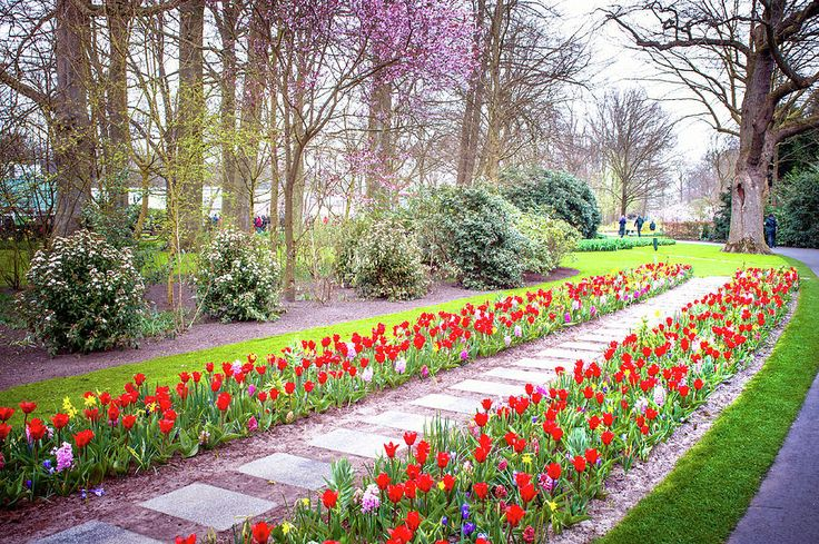 Floral Path In Keukenhof Botanic Garden Photograph by Jenny Rainbow