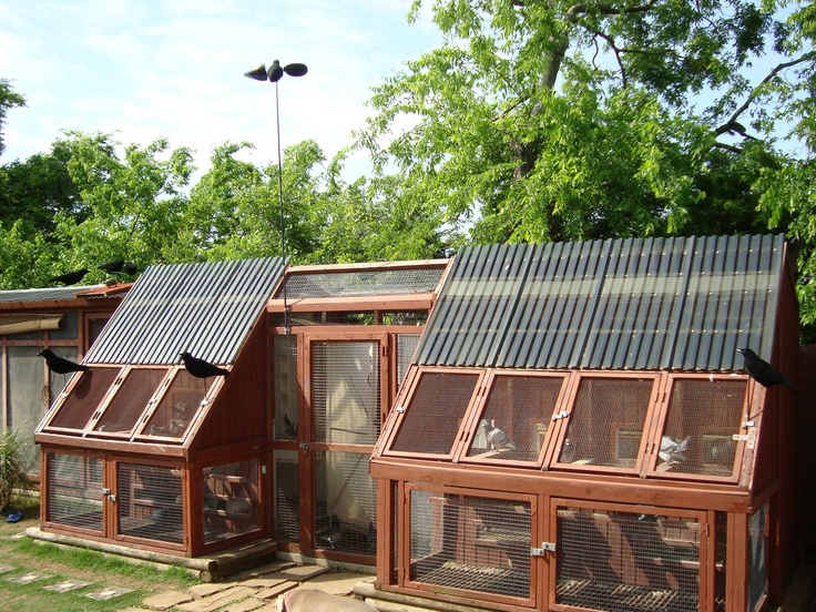 Pigeon coop pigeons and coops pinterest pigeon and coops for Pigeon coop ideas