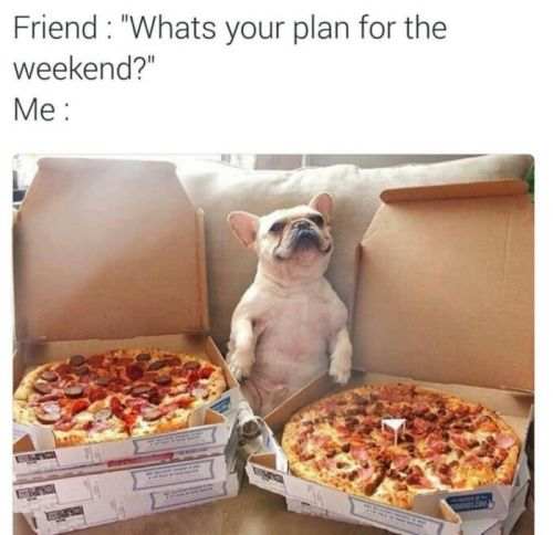 a711d406c4460a944815641919505832 bulldog frances lol funny 365 best ❤️pizza is life! ❤ images on pinterest comfort,Meal Prep Pizza Meme Funny