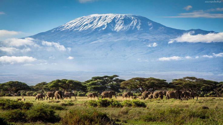 Kilimandżaro, Tanzania, Afryka, Góry, Słonie