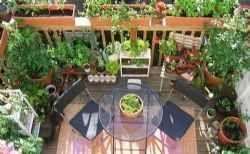 In giardino o anche sul balcone le aromatiche sono indispensabili In giardino o sul balcone, o ancora su una assolata terrazza di città, le erbe aromatiche, le così dette buone erbe, possono trovare posto e dare tante soddisfazioni a chi decide di dedicare qualche  #giardino #balcone #aromatiche
