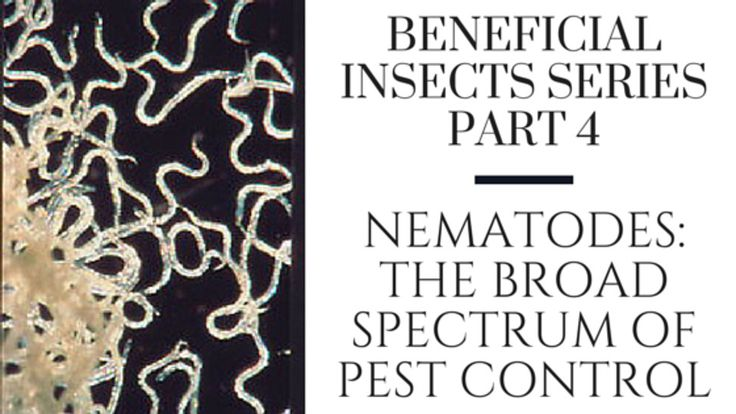 17 Best Images About Insect Pest Solutions On Pinterest