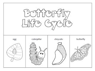 butterfly life cycle activities | Then I added a label the butterfly page too.