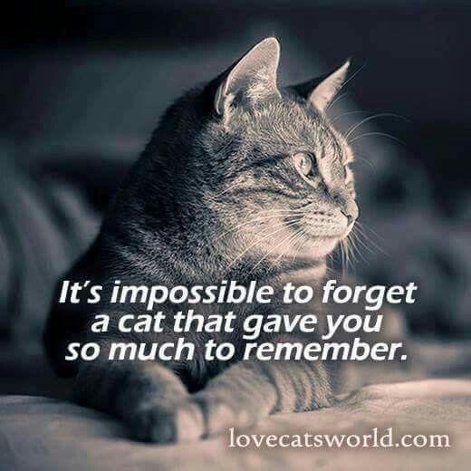 25 Best Ideas About Cat Memorial On Pinterest Pet Grief