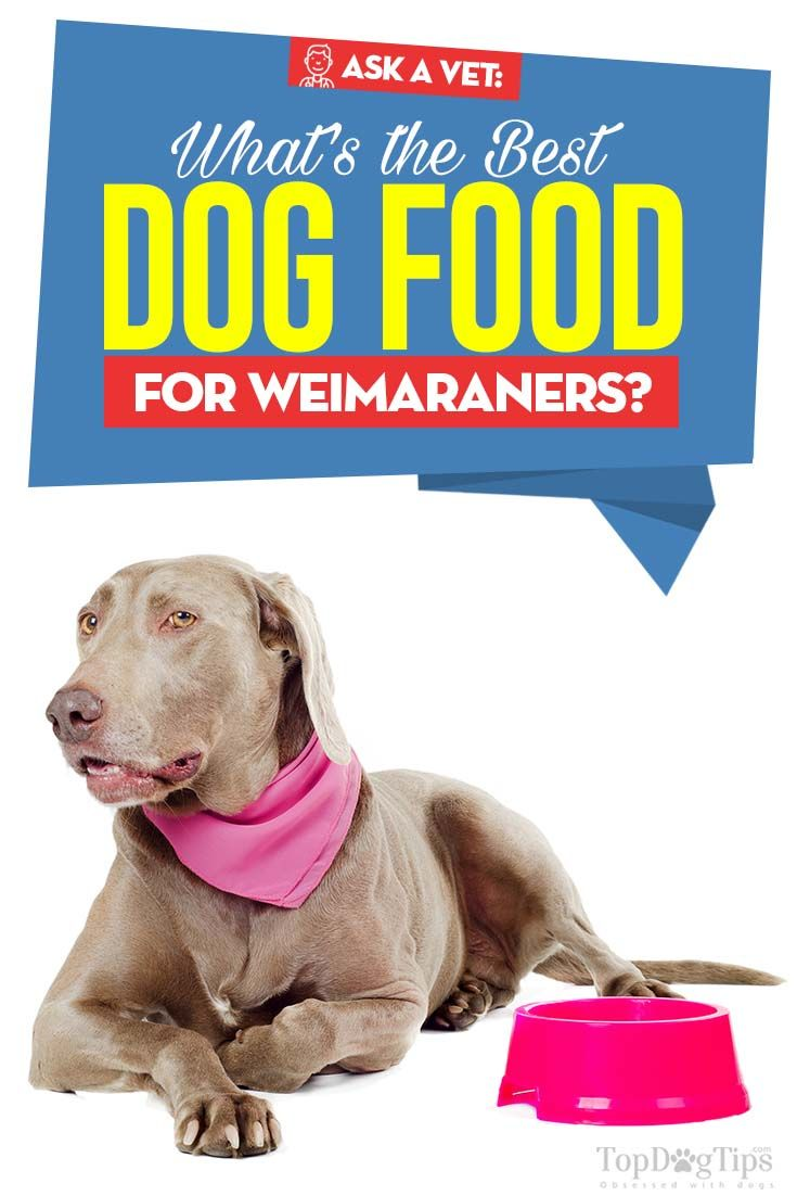 10 Vet Recommended Dog Food Brands That Are Inexpensive Best Dry