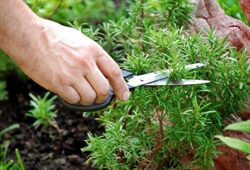 Dona Flor | Nutrientes para Plantas - 7 dicas para um jardim de ervas aromáticas