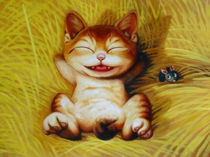 chat siberien adulte a vendre mount pearl