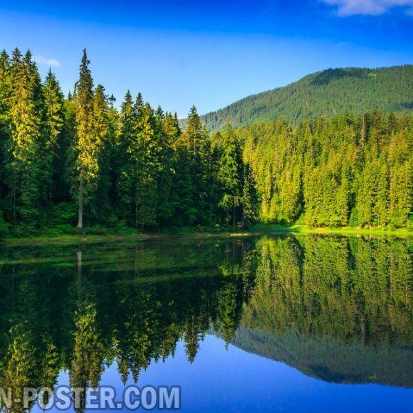 Jual Poster Gambar Pemandangan Alam Hutan Forest 02 Scenery Forest Beach Sunset