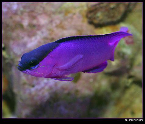 17 Images About Aquariums On Pinterest Colorful Fish