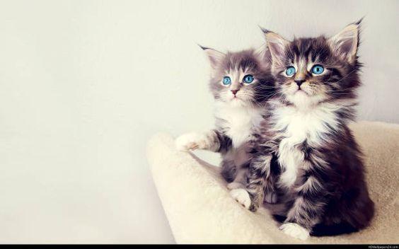 صور قطط باقة مختارة من أروع و أجمل القطط مع خلفيات Hd Kittens Cutest Cute Cats Cats