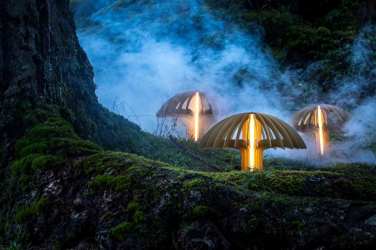 Shrooms photographed in the forest where they grow. #lighting #light #lights #ideas #design #lightingideas #lightingdesign #interiordesign