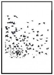 Posters med naturmotiv – natur, djur och blommor  Room99.se