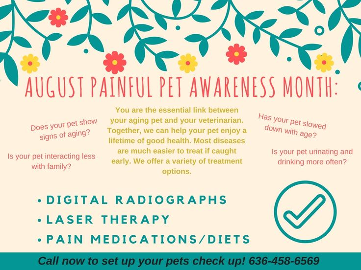 August 2016 Painful Pet Promo