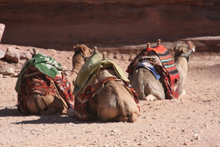 Can't wait to go to Petra in November  to research it prior to group trip