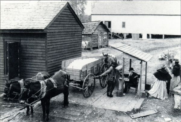 Cotton - The cotton is being weighed at the gin. Notice the wagon driver is checking the reading of the scales.
