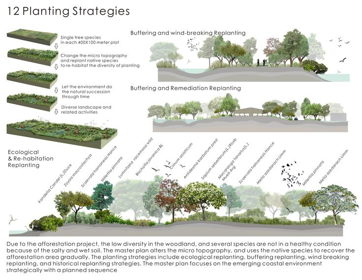 Garden Design Career Concept Image Review