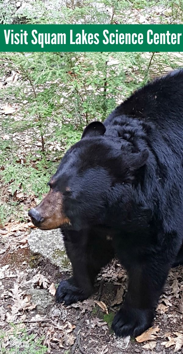 Visit Squam Lakes and check out the Black Bear Habitat #ad
