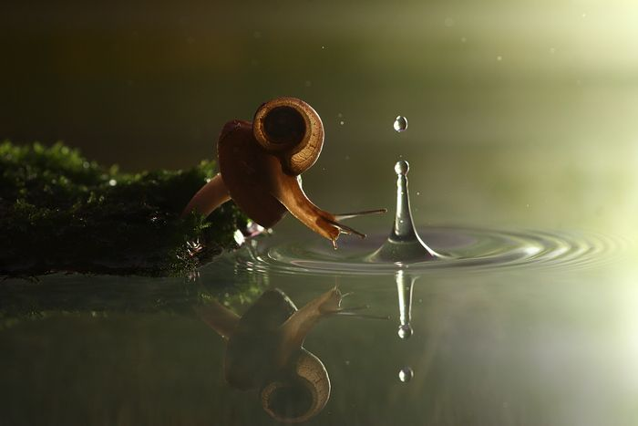 Snail and the raindrop #giftshopbkwed #travel #nature