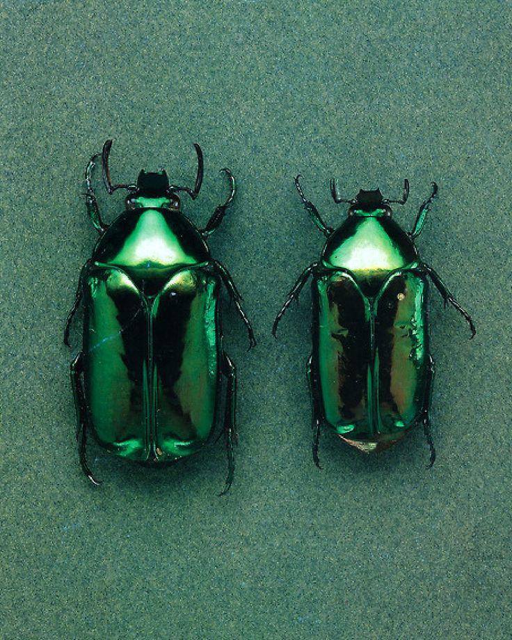 Beetles Green, most inspirational! see more: http://www.brabbu.com/en/inspiration.php