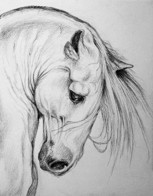 """""""Andalusian Horse pencil art portrait"""" by Evey Studios, Vancouver // pencil Drawing of Andalusian Spanish horse,gentle pose with beautiful mane.strong and powerful muscular neck,neo classic drawing"""