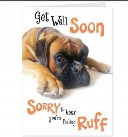 Best 16 best dog/cat get well soon images on Pinterest | Get well, Get  KM14
