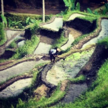 Rijstvelden in binnenland Bali #Indonesie #azie