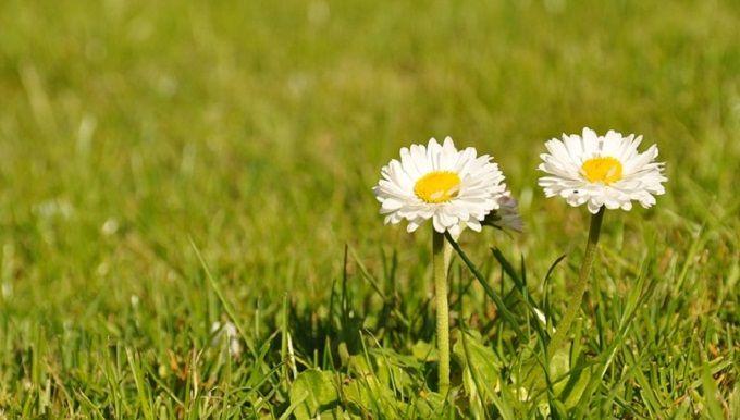 Plus de 1000 id es propos de plantes et jardinage sur - Desherbant naturel efficace ...