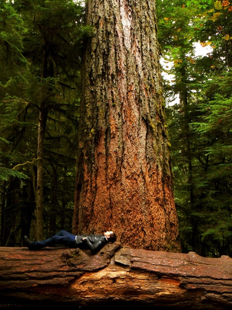 The big one, cathedral grove.