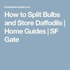 How to Split Bulbs and Store Daffodils | Home Guides | SF Gate
