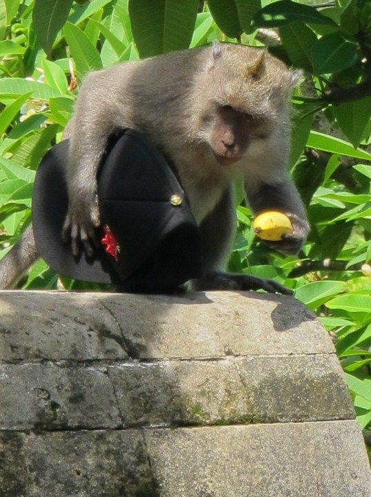 Cheeky Monkey Photo - Balinese Money Thief Indonesia | The Travel Tart Blog