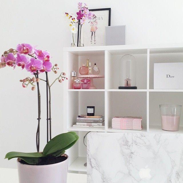 Zo mooi! Allemaal orchideeën in mijn kantoor!  gelijk een frisse stijlvolle sfeer