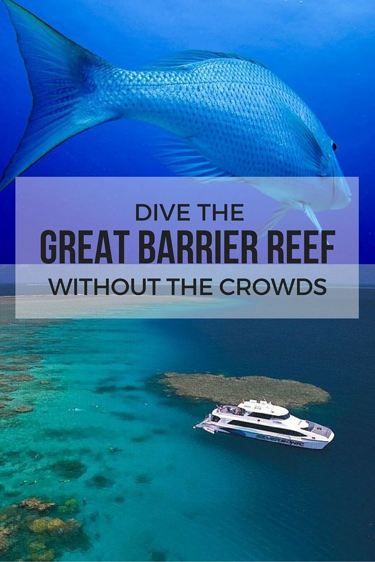 Diving the Great Barrier Reef in Australia can be amazing if you manage to avoid the crowds. Read our tips to help you avoid the crowds when you dive the Great Barrier Reef