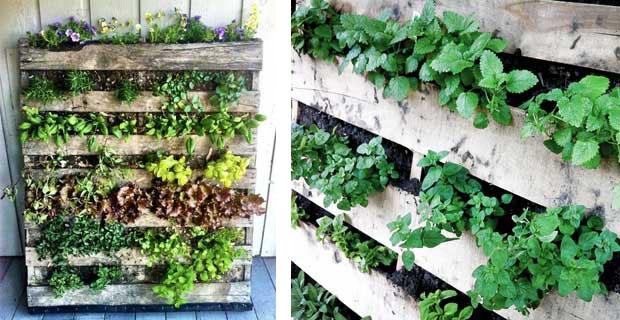 Orto verticale  idee per casa e giardino  Pinterest