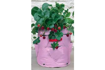 Pretty pink planter for strawberries or herbs. £12.98