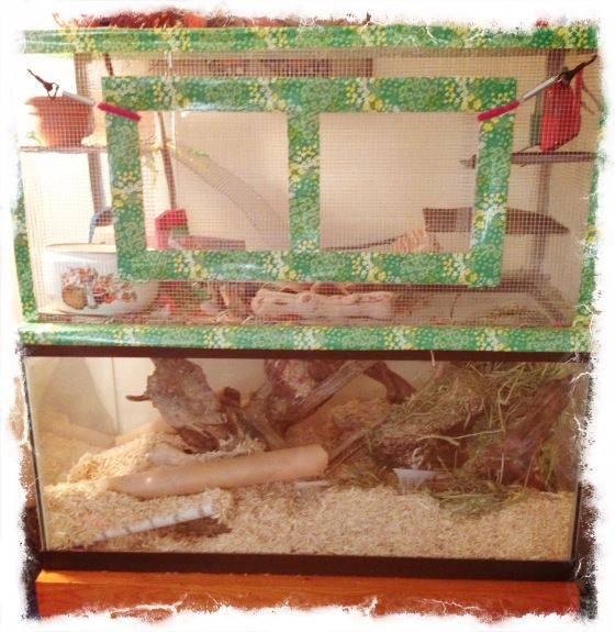 I love this idea for hamster house