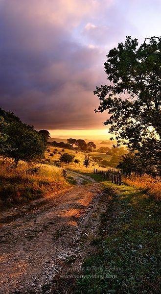 Narrow path at dawn in the Chiltern Hiulls, near Ivinghoe, Buckinghamshire, england, UK