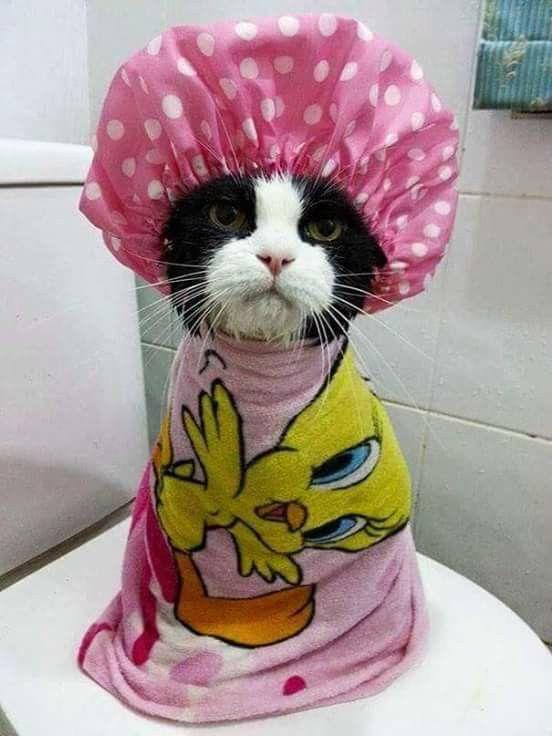 Que bien sienta un baño